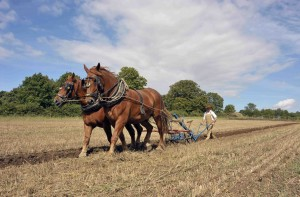 Ploughing at Gressenhall Farm and Workhouse © Norfolk Museums Service